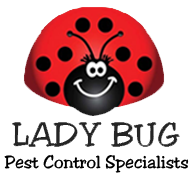 Lady Bug Pest Control